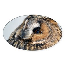 Eagle Owl Galaxy 2 Decal