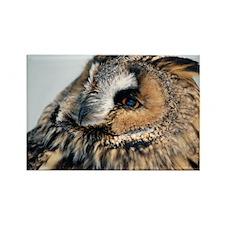 Eagle Owl Pillow Case Rectangle Magnet