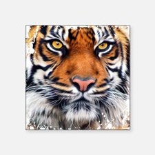 "Male Siberian Tiger Square Sticker 3"" x 3"""