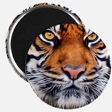 Male Siberian Tiger Magnet