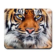 Siberian Tiger Male Mousepad