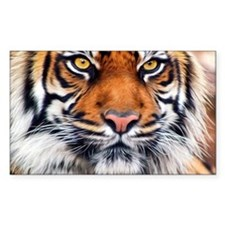 Siberian Tiger Male Decal