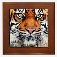 Siberian Tiger Male Framed Tile