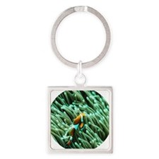 orange clownfish Square Keychain