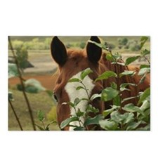 Peek-a-boo horse Postcards (Package of 8)