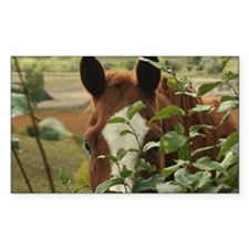Peek-a-boo horse Decal