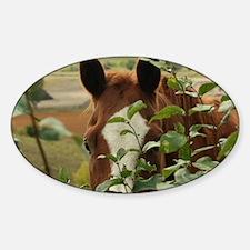 Peek-a-boo horse Sticker (Oval)