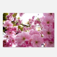 Spring time Cherry Blosso Postcards (Package of 8)