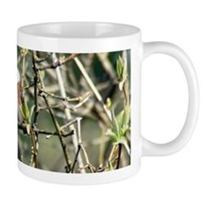 Black Capped Chickadee Centered Mug