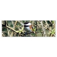 Black Capped Chickadee Centered Bumper Sticker