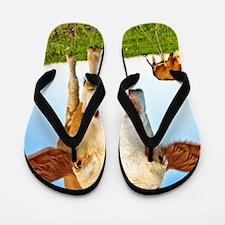 cow Flip Flops