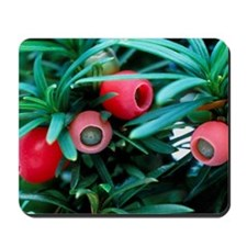 Yew tree berries Mousepad