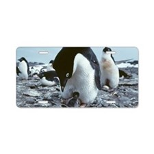 Adelie penguin with chick Aluminum License Plate