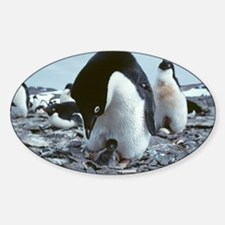 Adelie penguin with chick Decal