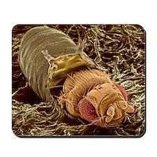 Adult fruit fly hatching, SEM Mousepad