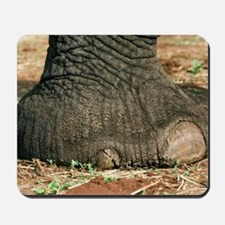African elephant's foot Mousepad