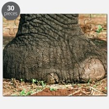 African elephant's foot Puzzle