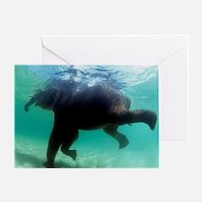 Asian elephant (Elephas maximus) Greeting Card