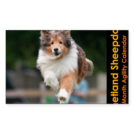 Shetland Sheepdog Agility Cale Sticker (Rectangle)