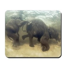 African elephants swimming Mousepad