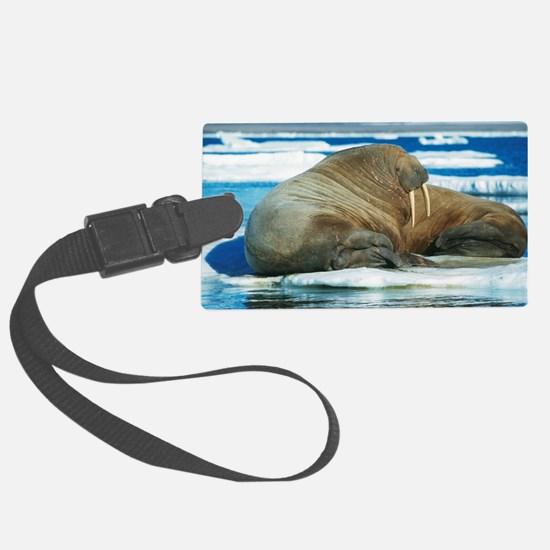 Atlantic walrus Luggage Tag