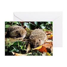 Baby hedgehogs Greeting Card
