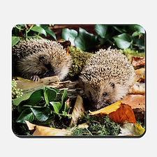Baby hedgehogs Mousepad