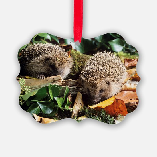 Baby hedgehogs Ornament