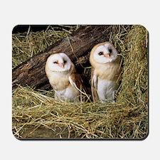 Barn owls Mousepad