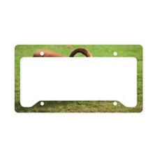 Baboons grooming License Plate Holder