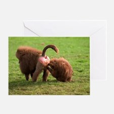 Baboons grooming Greeting Card