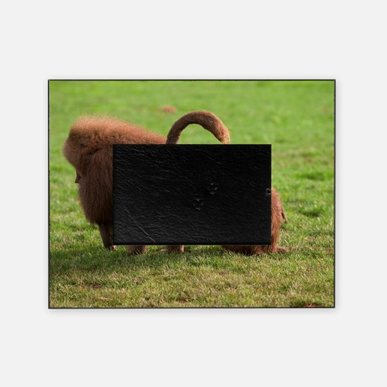 Baboons grooming Picture Frame