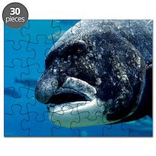Black musselcracker fish Puzzle