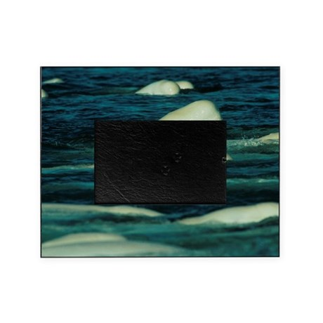 Beluga whales Picture Frame