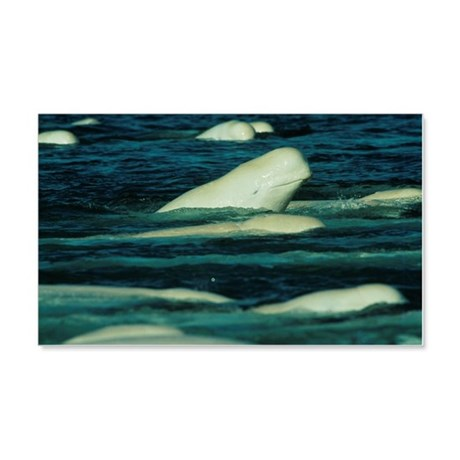 Beluga whales 20x12 Wall Decal