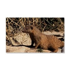 Banded mongoose Car Magnet 20 x 12