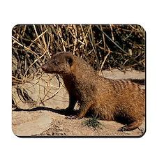 Banded mongoose Mousepad