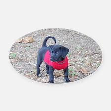 Beagador Puppy Oval Car Magnet