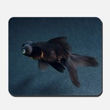 Black Moor ornamental fish Mousepad