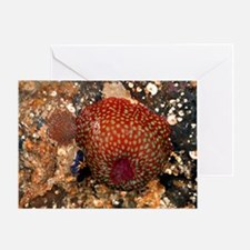 Beadlet anemone with young Greeting Card