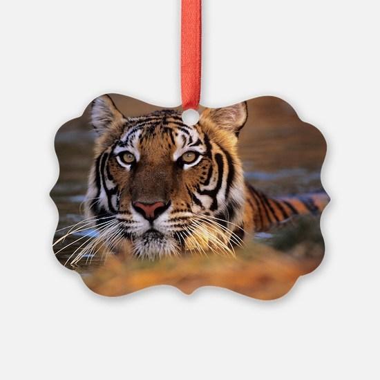 Bengal tiger (Panthera tigris) Ornament