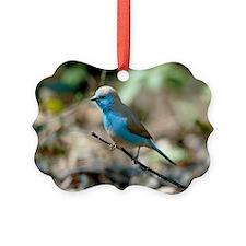 Blue waxbill male Ornament