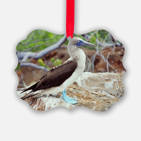 Blue-footed booby Ornament