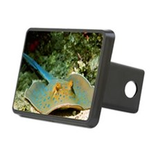 Blue-spotted fantail ray Hitch Cover