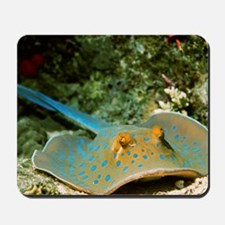 Blue-spotted fantail ray Mousepad