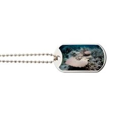 Bleached coral Dog Tags