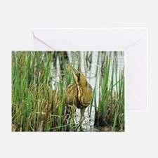 Bittern Greeting Card