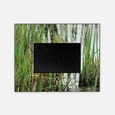 Bittern Picture Frame