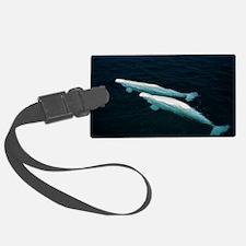 Beluga whales Luggage Tag