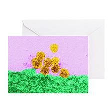West Nile virus, TEM Greeting Card